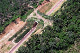 Passagem da fauna em trecho que corta a Floresta Nacional de Carajás. Foto: Ibama.