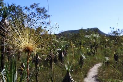 Chuveirinho na beira da trilha. Foto: Duda Menegassi.