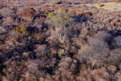 Vista da caatinga no interior do Parque. Foto: André Pessoa.