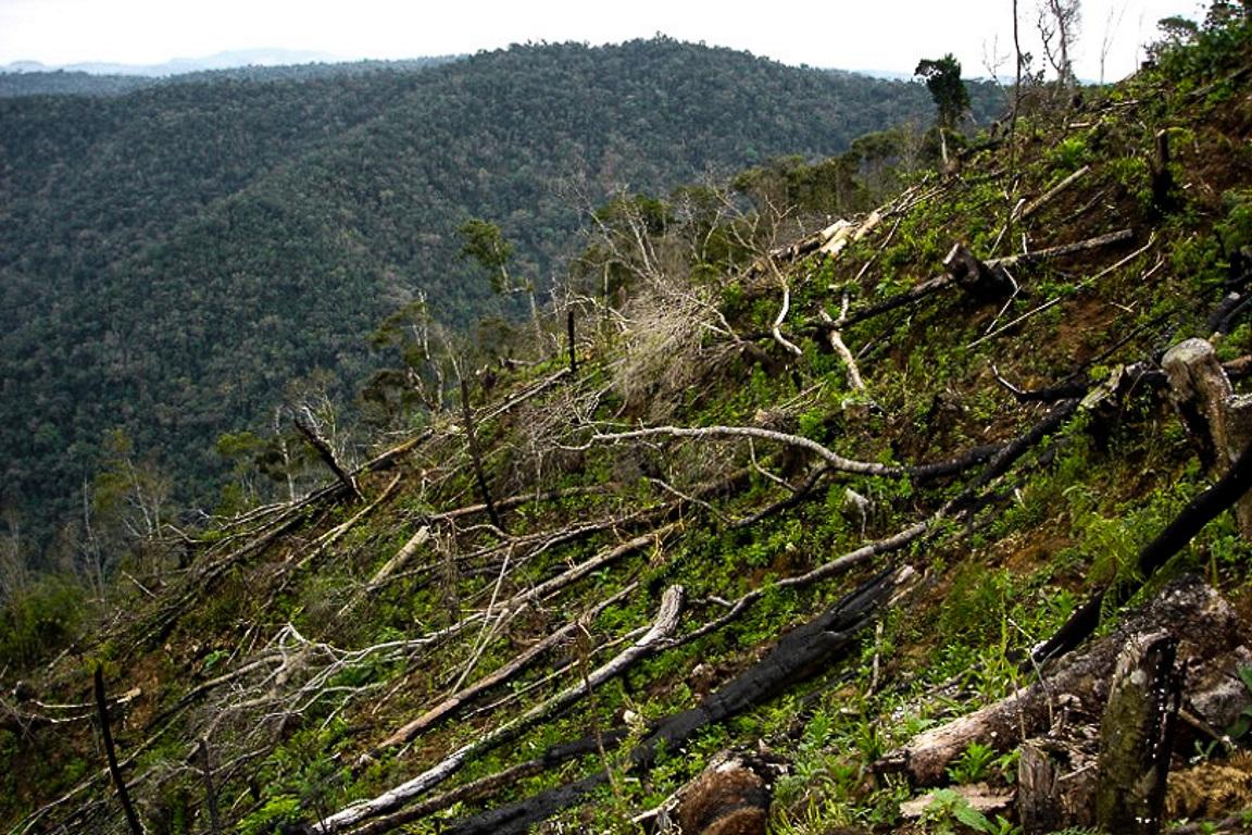 O triste registro do desmatamento ilegal na Mata Atlântica. Germano Woehl Jr./Instituto Rã-bugio.