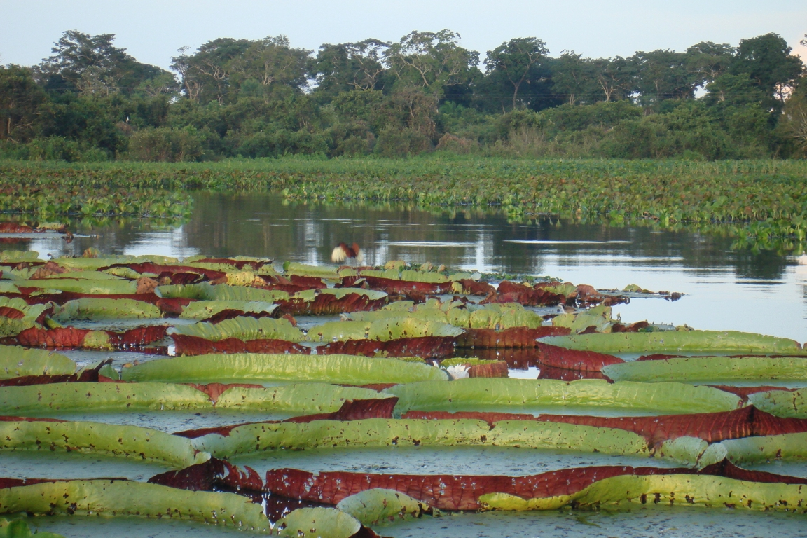 Pantanal e áreas úmidas terão uma linha de apoio exclusiva. Foto: Raphael Milani.