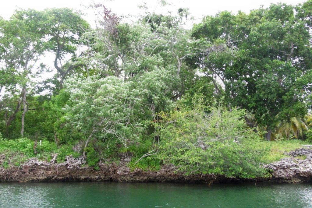 Ilhas do Rosário, Cartagena, Colômbia. O arquipélago é formado por 27 ilhas que fazem parte do Parque Nacional Corales del Rosario. Localizado no mar do Caribe, a área protegida tem 120 mil hectáreas e apresenta uma riqueza de mangues e formações coralinas - furam identificadas 62 espécies de corais nesta área. Ao redor do parque, existem 12 comunidades locais que tiram seu sustento de atividades derivadas do turismo. Foto: Fabíola Ortiz.