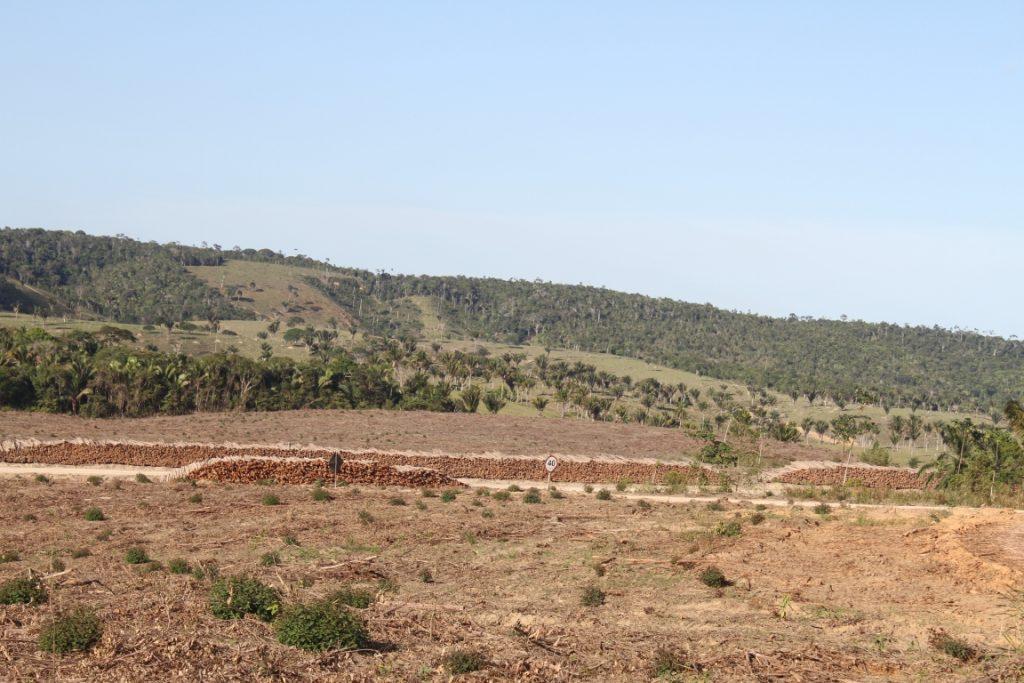Área localizada no município de Belmonte (BA). No primeiro plano é visto uma área recém cortada de plantação de eucalipto. Ao fundo é possível ver um remanescente florestal envolto por pastagem. Foto: José Carlos Morante-Filho.