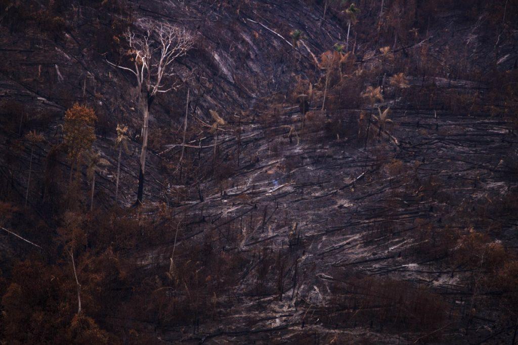 Enquanto o Congresso discute reduz a proteção da Floresta Nacional do Jamaxim, no Pará, na área protegida a invasão já é realidade. Foto: Bernardo Câmara.