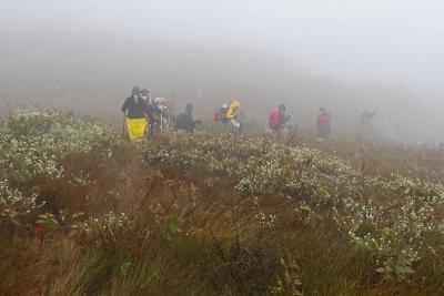 Em meio à neblina e ao clima inóspito, a Serra do Cipó floresce. Foto: Duda Menegassi.