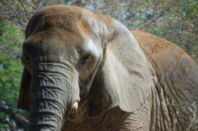 José Monzalvez foi esmagado por um elefante na Namíbia no sábado(12). Foto: Mikel Seijas Alonso/Flickr.