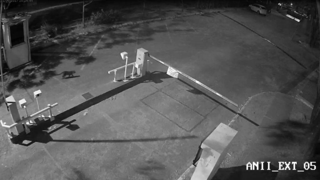 Imagem: reprodução/vídeo de segurança.