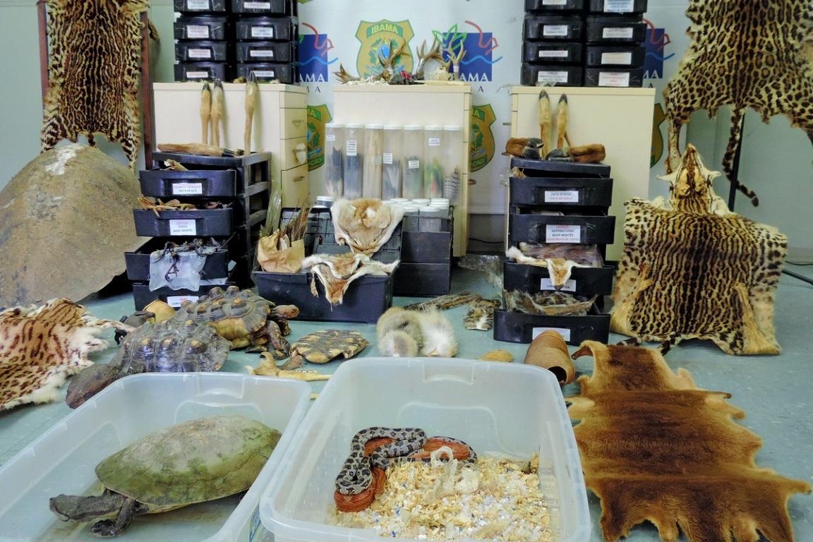 Inúmeros objetos, como peles de animais, foram apreendidos durante a operação Nigromante. Foto: Luiz Augusto Oliveira/Ibama.
