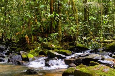 Reserva Biológica do Maicuru, no Pará, parcialmente sobreposta à Renca. Foto: Semas/PA.