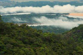 No ano passado, botânicos haviam calculado a existência de quase 12 mil espécies de árvores na região: são 6.727 de acordo com o novo cálculo. Foto: Fabian Michelangeli.