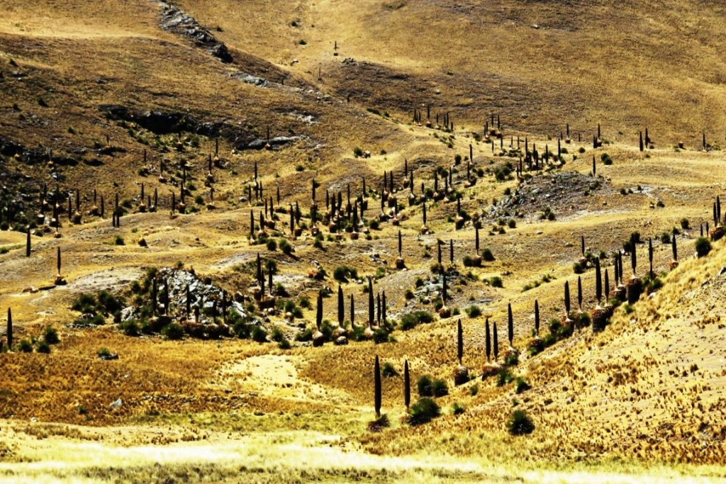Parque Nacional Huascaran. Foto: Marc Dourojeanni