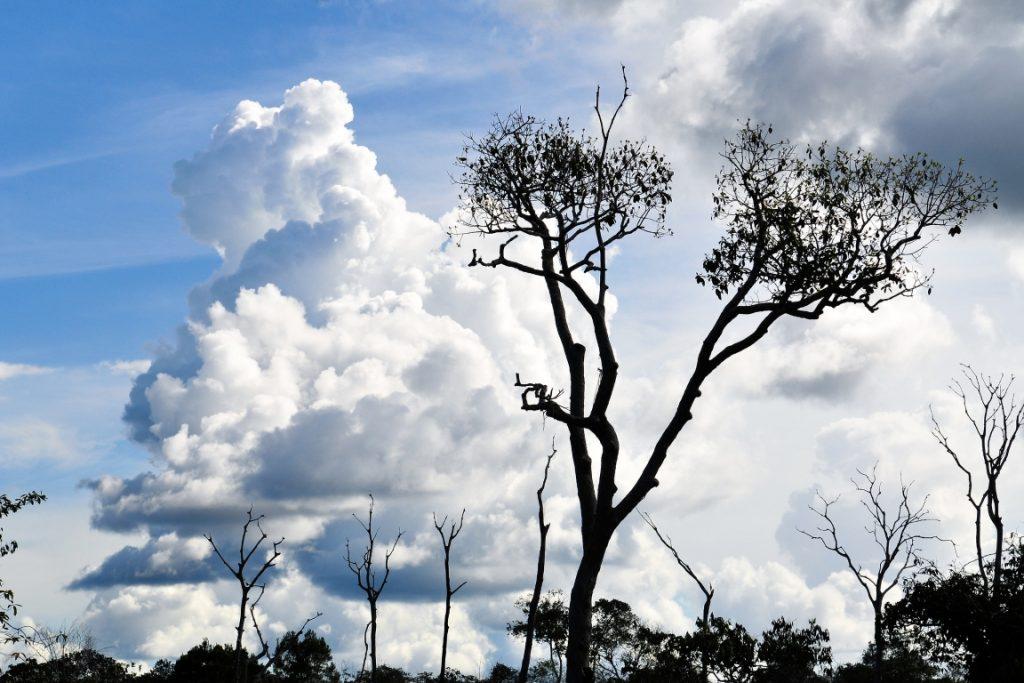 Novo Aripuanã, no Amazonas, foi incluído entre os prioritários na Amazônia, devido à grande área desmatada. Foto: Neil Palmer/CIAT-CIFOR/Flickr.