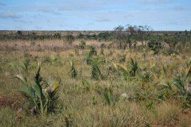 O cerradão protegido no Parque Nacional das Emas: Foto: Katia Kopp/Wikiparques.