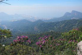 A vista da trilha do Morro da Freira, no Parque Nacional da Tijuca, que faz parte da Coordenadoria Regional - 8. Foto: Daniele Bragança.