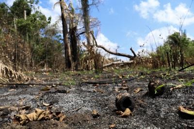 Trilha cruza uma área recém-desmatada onde a floresta será transformada em pasto. Foto: Duda Menegassi.