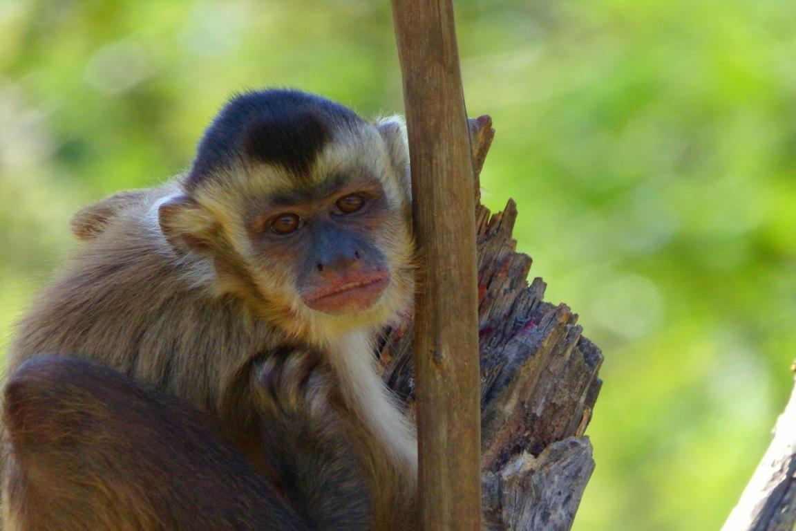 O monitoramento da biodiversidade faz parte de uma das metas institucionais do ICMBio, a principal é saber se as unidades de conservação estão sendo efetivas para o monitoramento da biodiversidade. Foto: Christina de Andrade Pereira/Wikiparques.