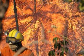 Incêndio consome Parque Nacional de Brasília. Foto: Fabio Rodrigues Pozzebom/Agência Brasil.