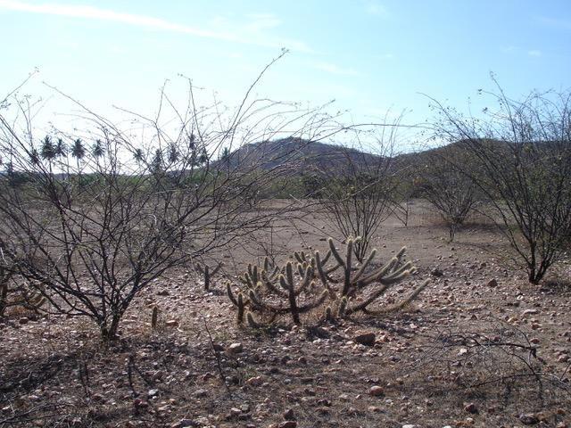 Fisionomia da Caatinga explica endemismo. Foto: Thais Guedes.