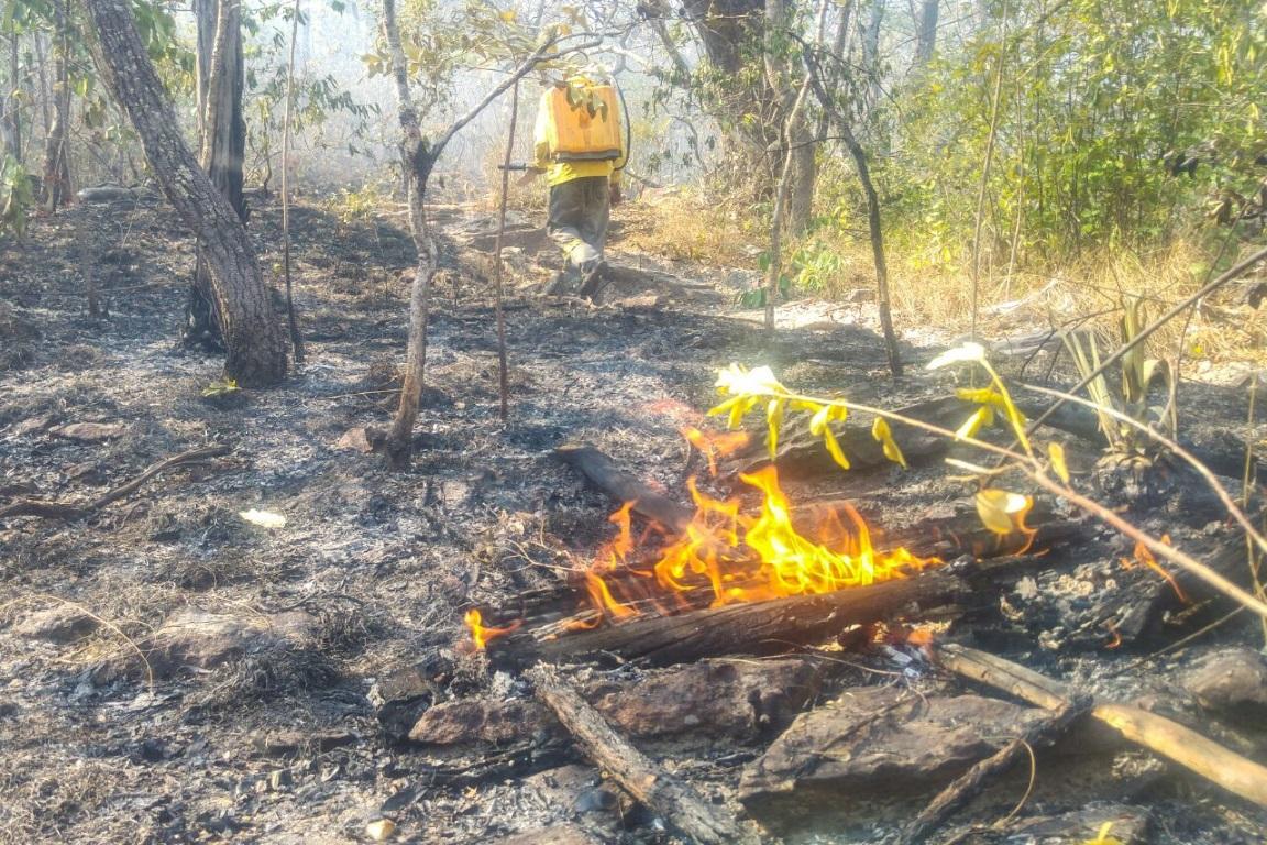 Muitas perdas pelas queimadas no Parque da Chapada dos Veadeiros. Foto: Fernando Tatagiba.