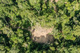 Em 2014, o Greenpeace já havia feito uma investigação e constatou extração ilegal de madeira. Foto: Fábio Nascimento/Greenpeace.