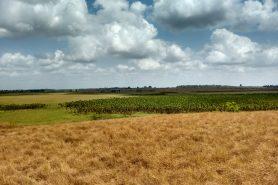 Novo zoneamento coloca em risco o Cerrado Amapaense. Foto: William DuMatu.