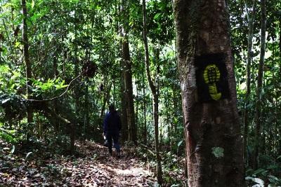 A Trilha Chico Mendes, no Acre, atualmente possui cerca de 90 quilômetros. Foto: Duda Menegassi.