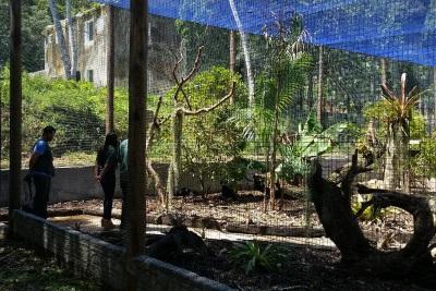 Viveiro onde habitará as duas aves até a reintrodução definitiva. Foto: Marco Freitas.