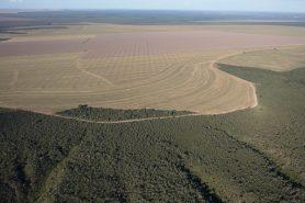 Plantação se expande sobre área de cerrado em Balsas (MA). Foto: Marizilda Cruppe/Greenpeace.