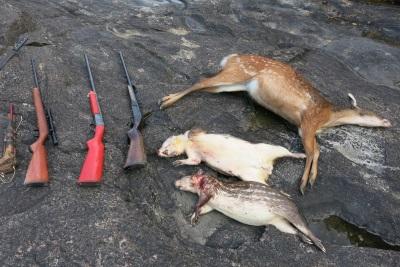 A caça é uma das atividades ilegais mais registradas nas unidades de conservação da Amazônia. Crédito: Érico Kauano.
