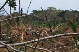 Desmatamento na Resex Chico Mendes, a terceira mais desmatada na Amazônia. Foto: Duda Menegassi.