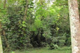 O Instituto Chico Mendes de Conservação da Biodiversidade (ICMBio) afirmou que fará o plano de manejo da Floresta Nacional Mário Xavier, no Rio de Janeiro, entre 12 a 14 meses. Foto: Flona Mário Xavier/ICMBio.