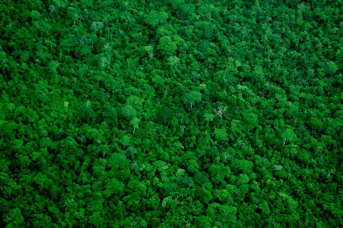 """O relatório """"Desmatamento zero na Amazônia: como e por que chegar lá"""" indica os meios de como alcançar o desmatamento zero, como mudanças no sistema de produção agropecuária, combate à grilagem de terras públicas, atuação do mercado e estímulo à economia florestal. Foto: Ana Cotta/Flickr."""