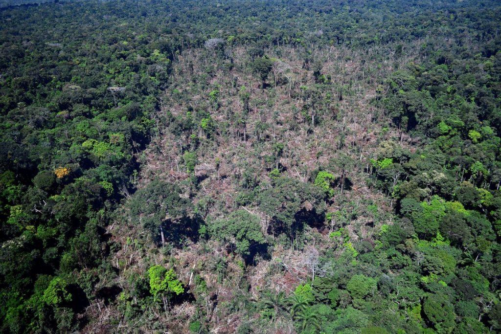 Árvores derrubadas em área de exploração ilegal de madeira em Novo Progresso, Pará. Foto: Vinícius Mendonça - Ascom/Ibama.