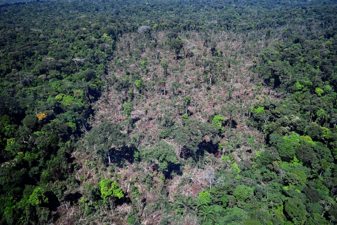 INPE lança novo portal sobre desmatamento na Amazônia
