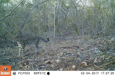 Foto: Projeto Caatinga Potiguar (UFRN-WCS).