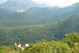 O Ministério do Meio Ambiente oferece nove cursos a distância na área socioambiental. Foto: Bruno Fontes/Flickr.