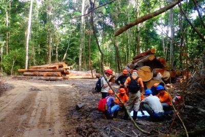 Plano de manejo florestal da Resex estipoula o corte de 1 árvore a cada 3 árvores da mesma espécie preservadas. Foto: Katia Carvalheiro/IEB.