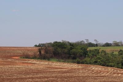 A borda entre os canaviais e a floresta é um mero aceiro, que não funciona. Foto: Fabio Olmos.