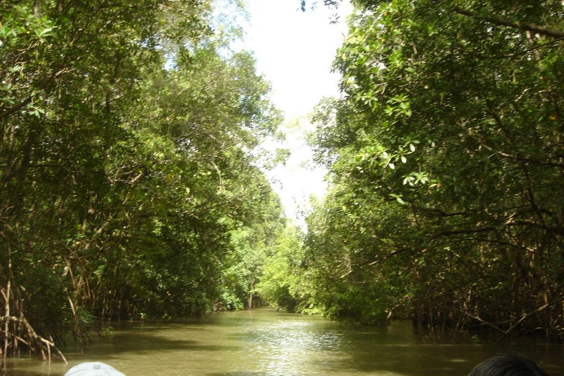 As atividades da mineradora Vale acarretaram o assoreamento de rios e igarapés e o enfraquecimento do solo no nordeste do Pará. Foto: Wikipédia.