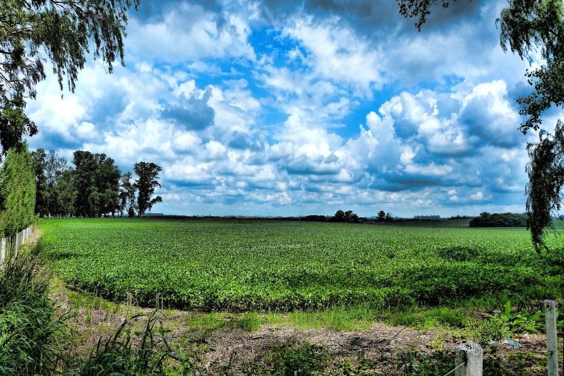 Segundo o governo, nas safras de 2016 e 2017, foram identificados 47,365 hectares de plantio de soja em área desmatada. Esse é o maior número de perda de floresta para o cultivo desde 2008. Foto: Mariano Mantel - Flickr.