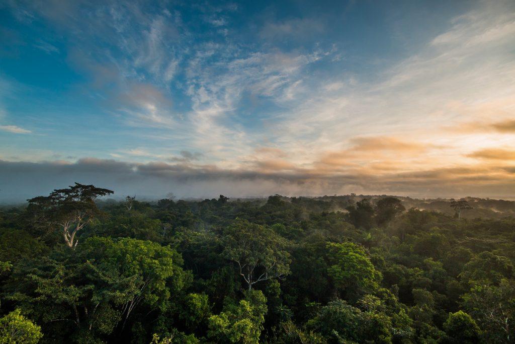 Floresta ameaçada por rodovia na Bolívia. Crédito: Oriol Massana e Adrià López-Baucells.