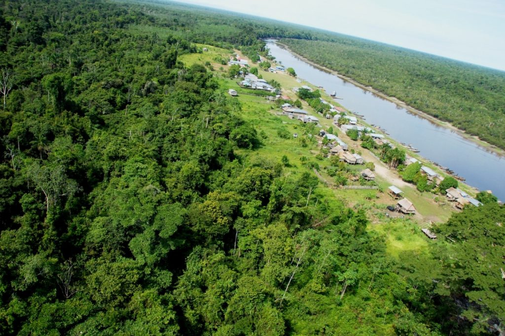 O Parque Nacional de Yaguas é o lar de 3 mil espécies de plantas. Foto: Álvaro del Campo/Mongabay.