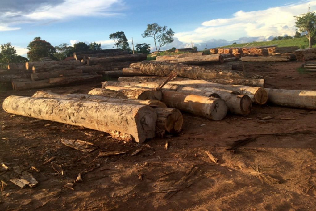 Toras de madeira apreendidas extraídas das terras indígenas Sete de Setembro e Roosevelt em 2016. Foto: Renê Oliveira/Ibama.