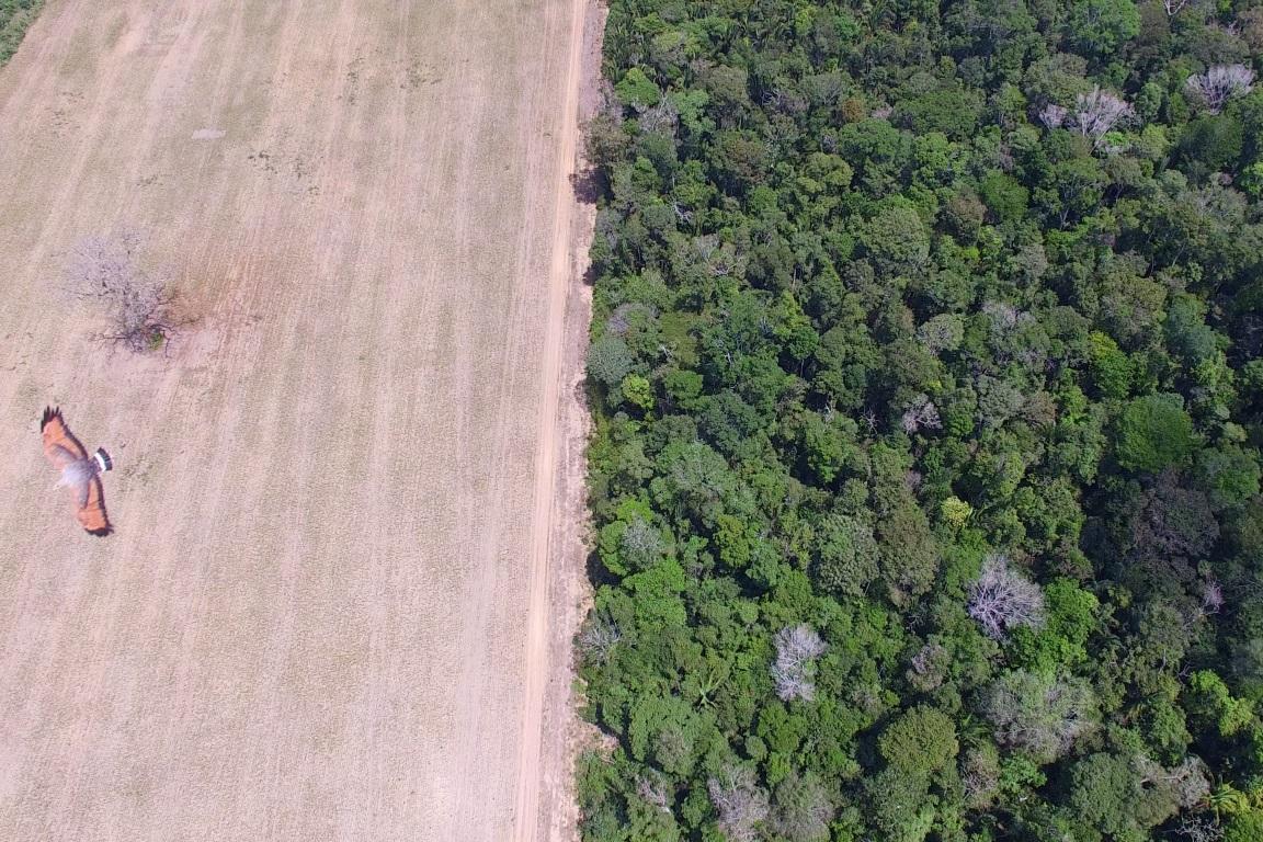 Documentário Beyond Fordlândia debate exploração predatória da Amazônia