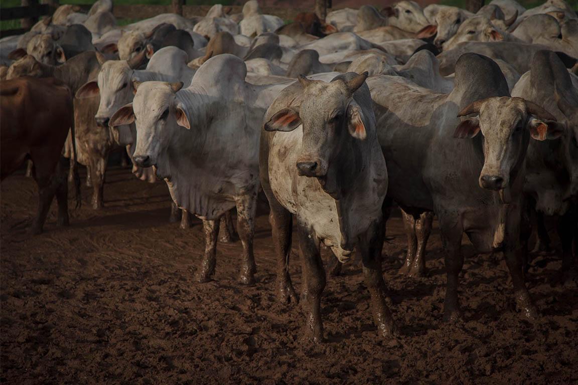 TAC da Carne: MPF divulga auditorias, mas evita punições