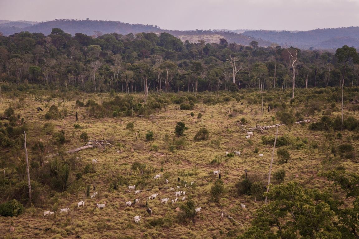 Em abril, Jamanxim perdeu um Ibirapuera a cada 2,5 dias