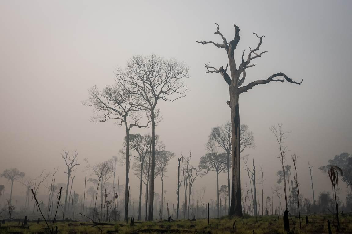 Um terço das áreas protegidas do mundo sofrem intensa pressão humana