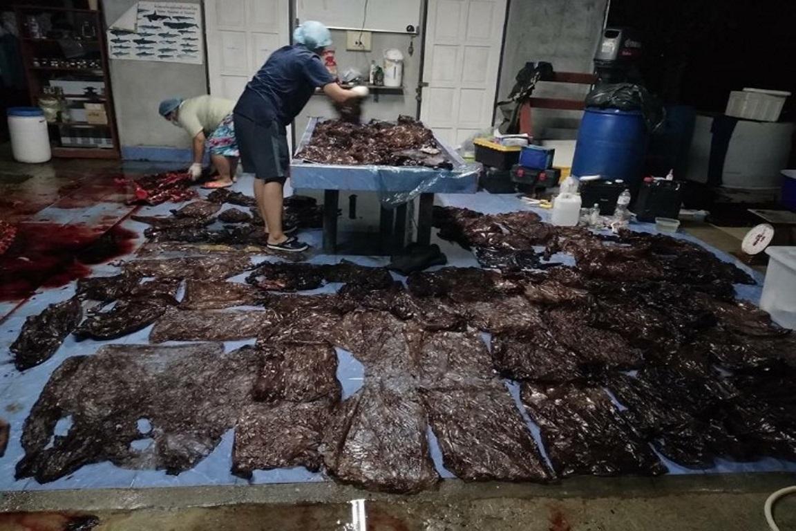 Baleia morre após ingerir 80 sacolas plásticas