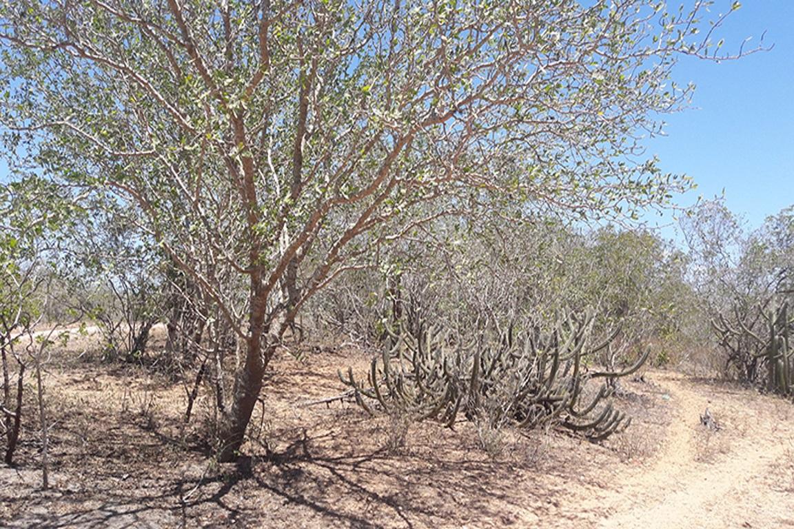 Em dez anos, mais de 70 mil Km² de solos foram degradados na Caatinga