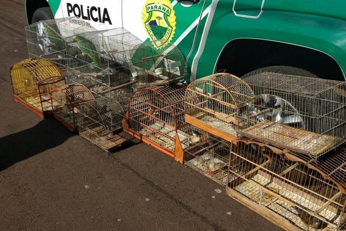 Policiais prendem suspeitos de tráfico de pássaros silvestres no Paraná